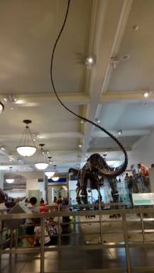 Museum of Natural History , New York