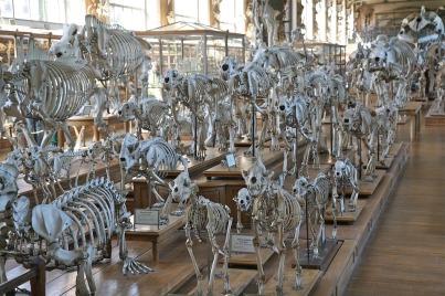 Museum of Skeletons